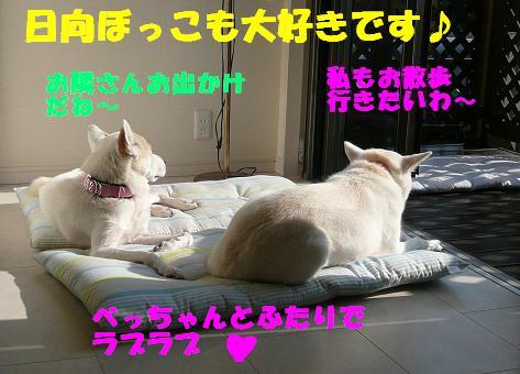 f0121712_685436.jpg