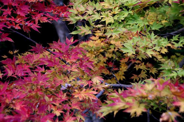 紅葉スタート 亀岡 鍬山神社_e0048413_19512939.jpg