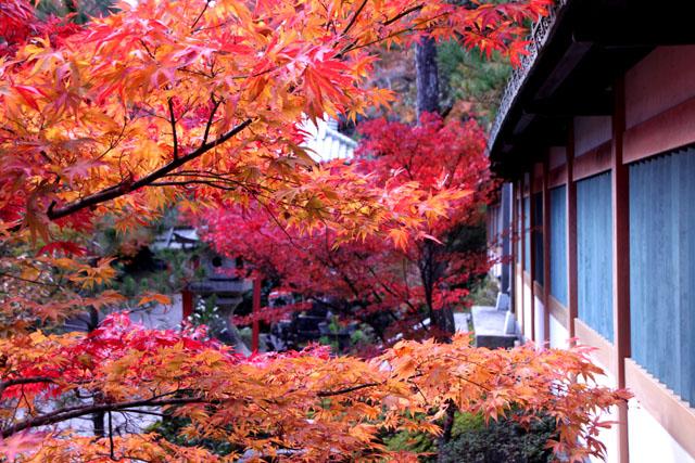 紅葉スタート 亀岡 鍬山神社_e0048413_19514218.jpg