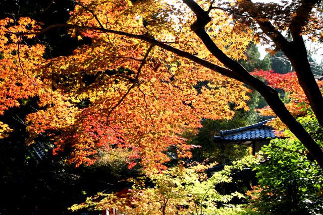 紅葉スタート 亀岡 鍬山神社_e0048413_19515566.jpg