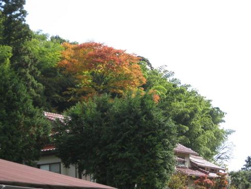 「林檎天国」で~~_a0125419_938227.jpg