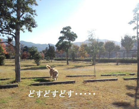 b0127531_21442499.jpg