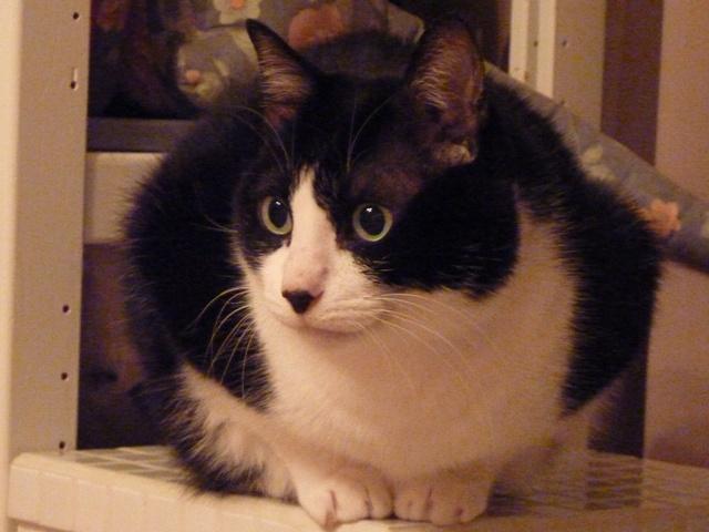 まんまるふわふわ猫 空編。_a0143140_206454.jpg
