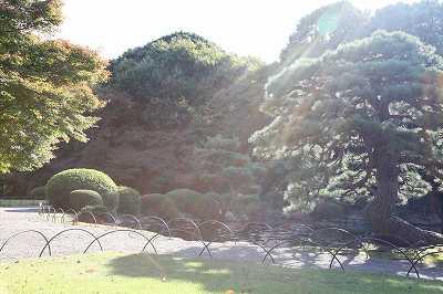 菊花壇展_d0065558_17215449.jpg