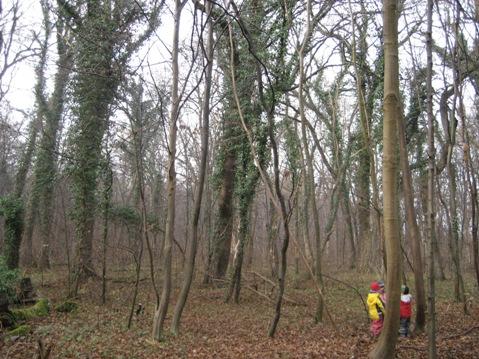 【ドイツ教育関連視察ツアー】森の幼稚園を訪れました_f0037258_8172818.jpg