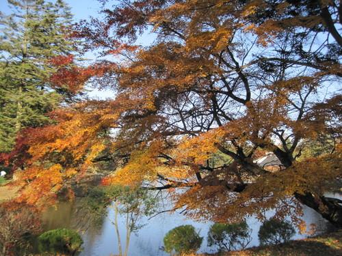 紅葉お散歩_f0236260_1710682.jpg