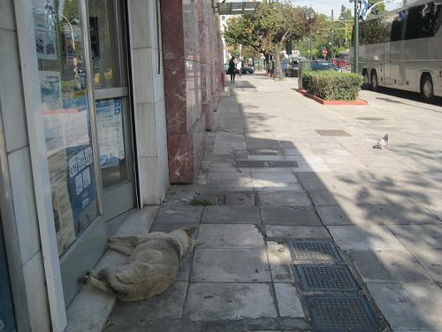 野良犬の昼寝の仁義_f0037264_473129.jpg