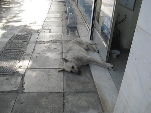 野良犬の昼寝の仁義_f0037264_495616.jpg
