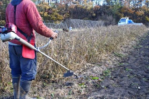 大豆を刈り取る_c0110869_1531779.jpg