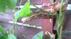 緑のカーテンその後_c0150273_11203623.jpg