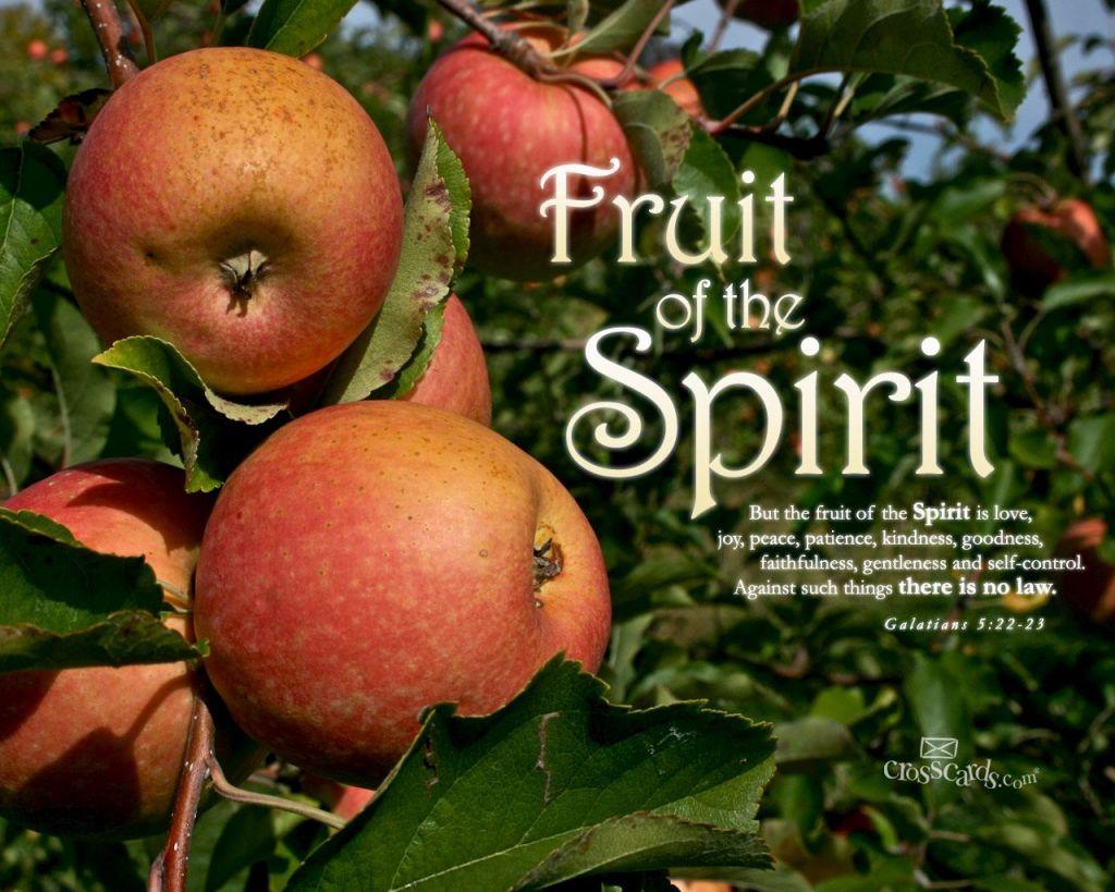 11月11日使徒4-6章『聖霊による私たちの証し』_d0155777_8563776.jpg