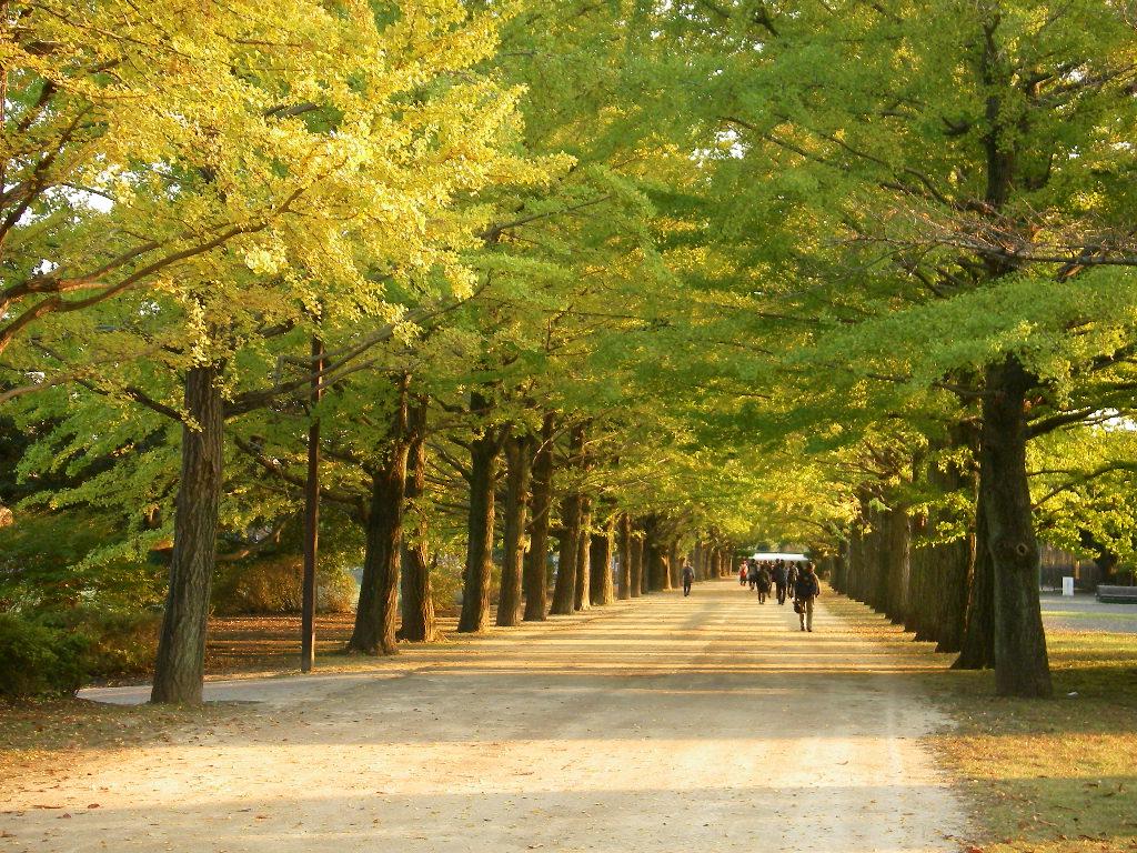 記念公園通信_b0172896_8112641.jpg