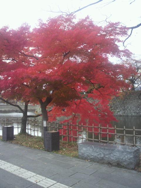 秋の紅葉_c0145608_15265575.jpg