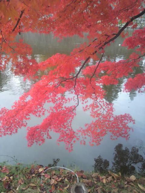 秋の紅葉_c0145608_1527846.jpg