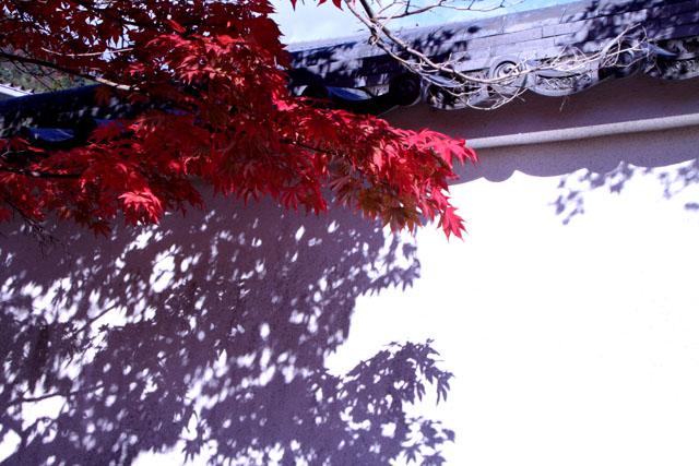 紅葉スタート 花の寺「勝持寺」_e0048413_2261011.jpg