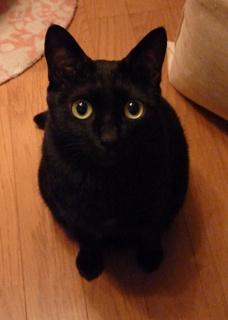 どんぐりころころ猫 のぇる編。_a0143140_21295562.jpg