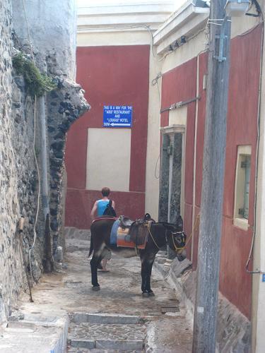 サントリーニ島のフィラのロバさん_f0037264_50331.jpg