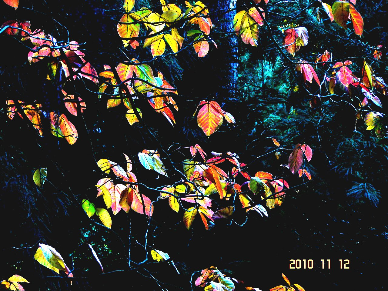 f0104277_19442994.jpg