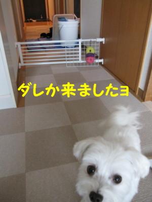 b0193480_10571955.jpg