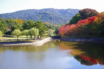 奈良の秋_c0207890_1252233.jpg