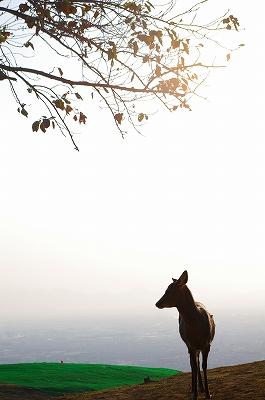 奈良の秋_c0207890_1291880.jpg