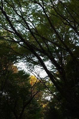 奈良の秋_c0207890_139890.jpg
