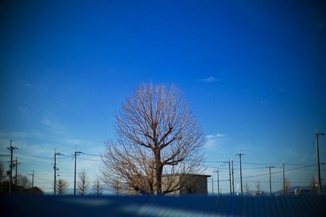d0118803_1084215.jpg