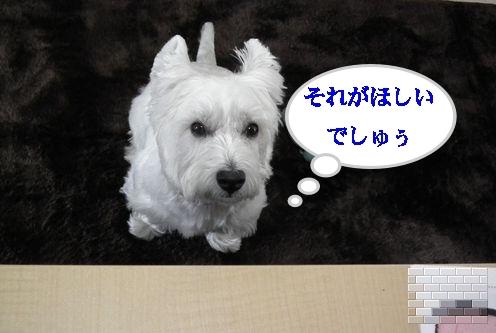 オフ会に行ってタコさん人気♪_a0161111_1920846.jpg