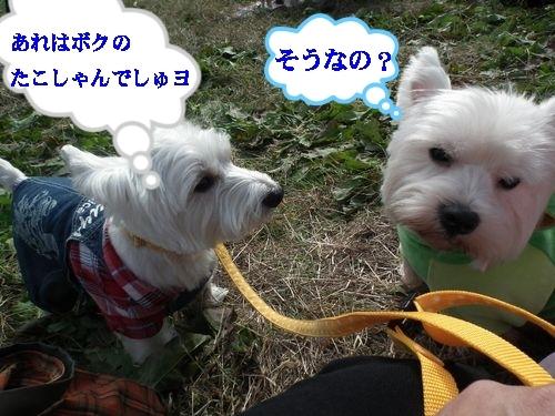 オフ会に行ってタコさん人気♪_a0161111_19242014.jpg