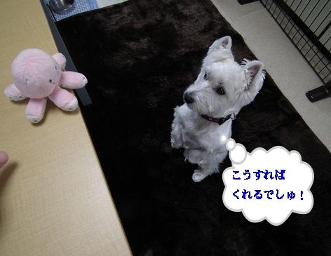 オフ会に行ってタコさん人気♪_a0161111_19353027.jpg