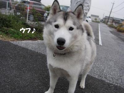f0143123_20385472.jpg