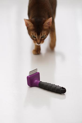 [猫的]ファーミネーター_e0090124_814137.jpg