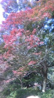秋の京都_c0186849_23134732.jpg