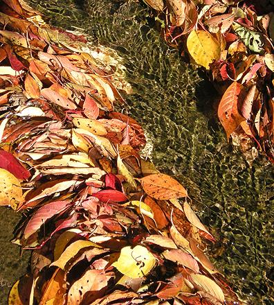 11月13日 白井宿の桜紅葉と白井城趾_a0001354_22362429.jpg