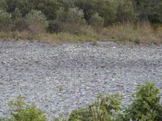 11月9日 涸れた今川を見る会-2_f0197754_0471747.jpg