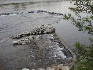 11月9日 涸れた今川を見る会-2_f0197754_1133228.jpg