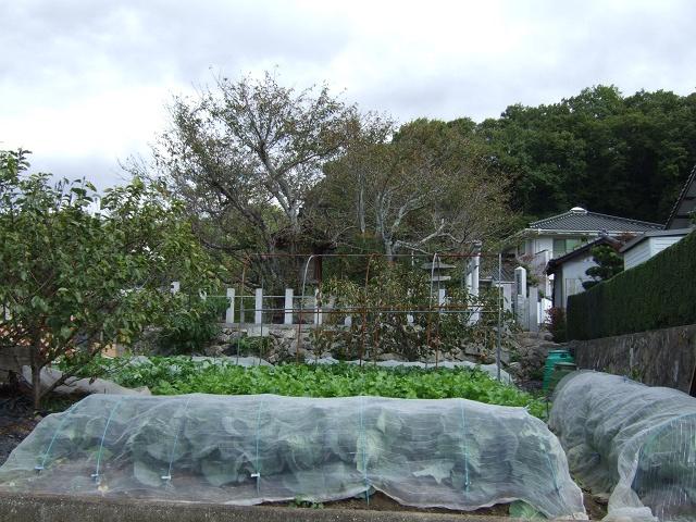 海田・東祇園神社(祇園社)_b0095061_18174749.jpg