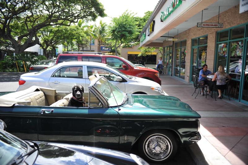 #10-235    Hawaii days ~ Pets_b0065572_7231332.jpg