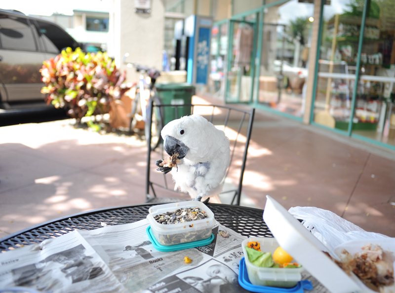 #10-235    Hawaii days ~ Pets_b0065572_724990.jpg