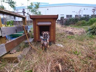 ミックス犬 「タバ」_f0059988_17193100.jpg