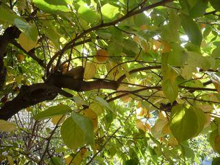 秋のごちそう_c0203401_9512726.jpg
