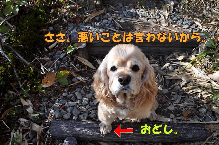 b0067012_010322.jpg