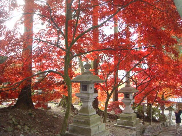 紅葉が見ごろです~_f0229217_8174784.jpg
