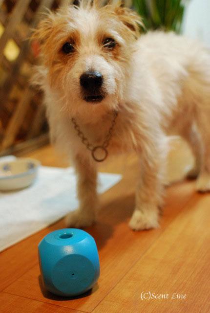 オススメ!犬用おもちゃとグッズのラインナップ_c0099133_5164915.jpg