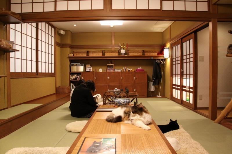 大阪市中崎町「猫の時間 きた本店」_d0167436_835257.jpg