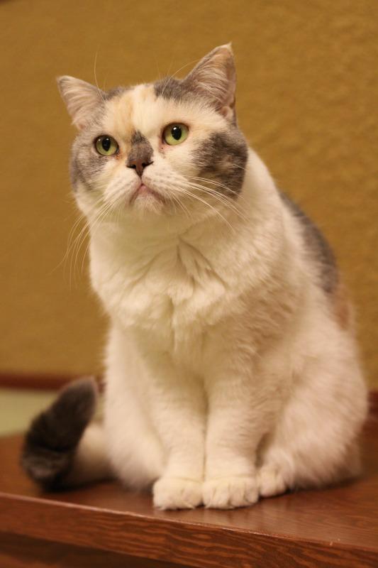 大阪市中崎町「猫の時間 きた本店」_d0167436_8353544.jpg