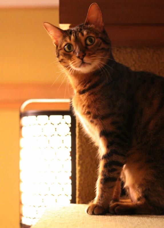大阪市中崎町「猫の時間 きた本店」_d0167436_8353869.jpg