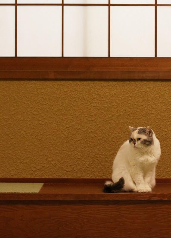 大阪市中崎町「猫の時間 きた本店」_d0167436_8354511.jpg