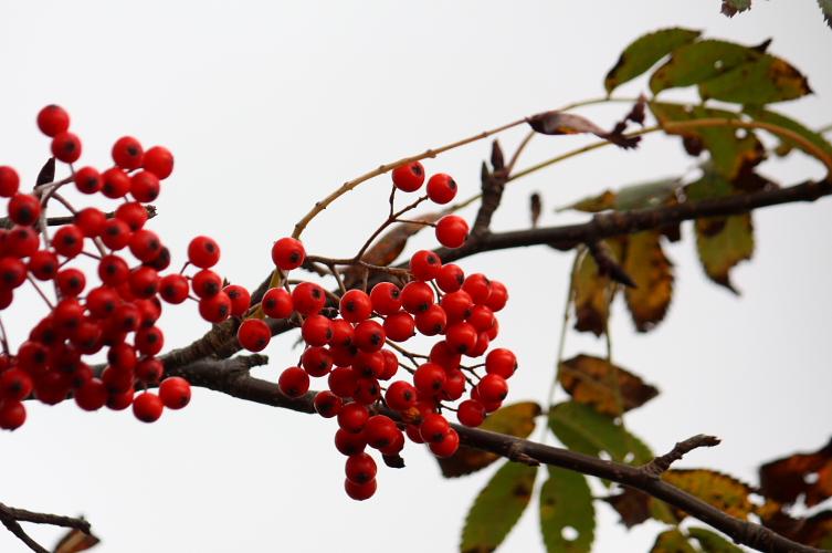 秋でもなく冬でもなく 11月14日_f0113639_1917285.jpg