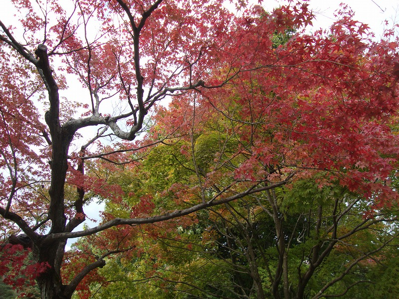 newネイル …平山_a0144648_23415089.jpg